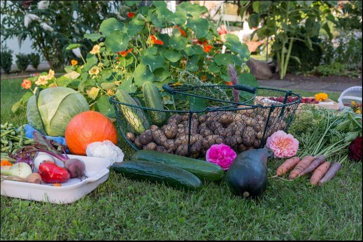Vegetables such as cucumbers, onions, potatoes, carrots, etc, and flowers on the green grass in the garden