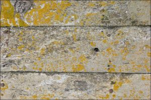 Close up of a gray wooden surface with mold on it and yellow spots