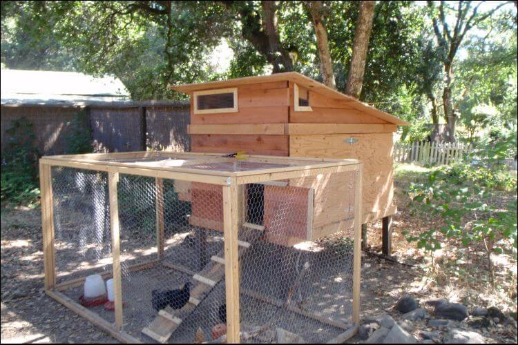 Wooden chicken coop seen from the diagonal, with chickens inside, in a sunny backyard