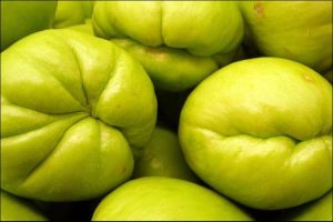 how to grow chayote close up of chayote fruits