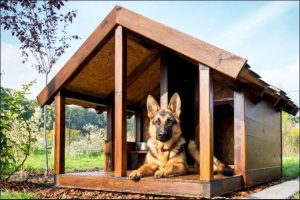 how to build a dog house German shepherd sitting in its house