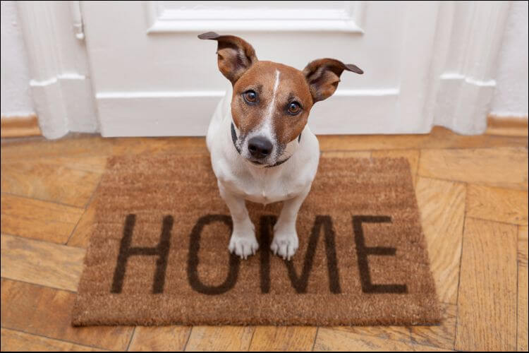 how to build a dog house dog sitting on a mat that says 'Home'