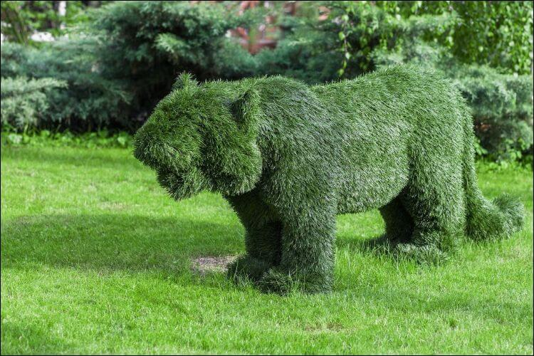 landscaping with evergreens hedge animal