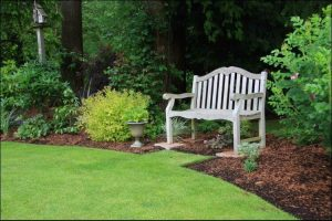 landscaping with evergreens evergreen decor