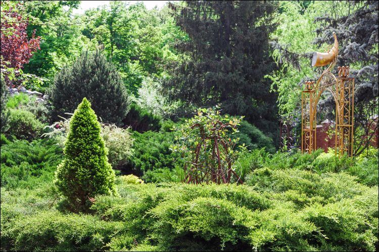 landscaping with evergreens evergreen design with trees and bushes