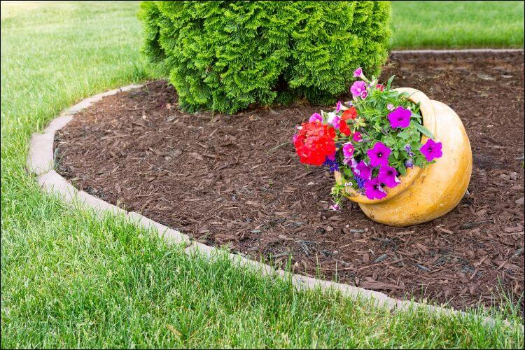 landscaping with evergreens evergreen deocr