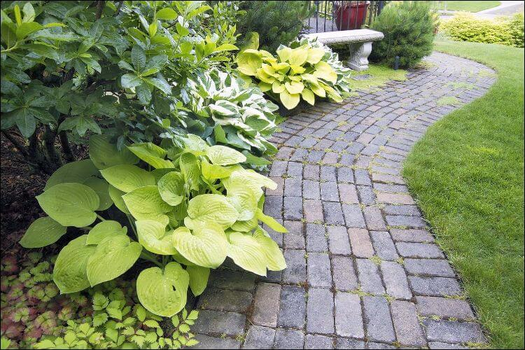 landscaping with evergreens stone pathway lined with evergreens