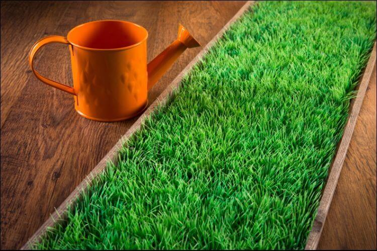 indoor vegetable gardening artificial turf placed indoors