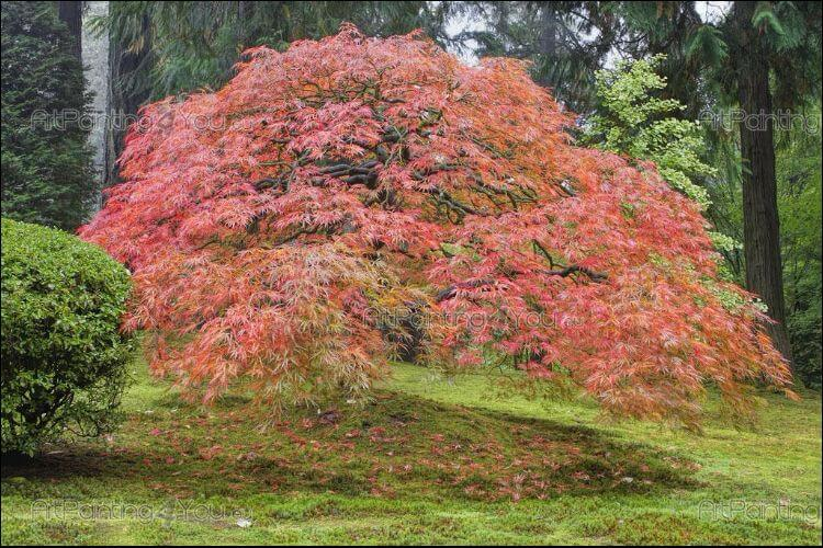 plants that survive winter Japanese maple tree