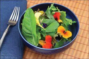 how to grow nasturtium nasturtium flowers in a green salad
