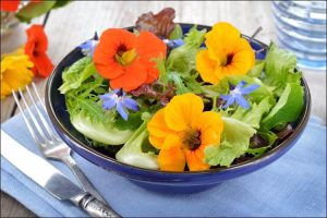 how to grow nasturtium green salad with nasturtium flowers
