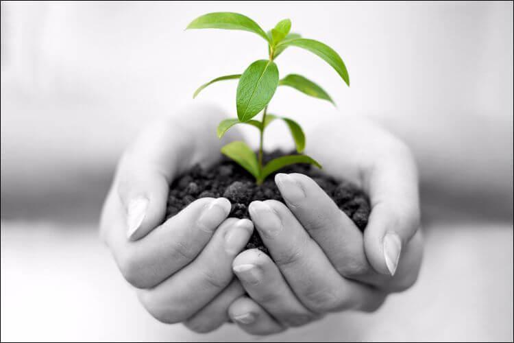 indoor vegetable gardening holding plant in hands