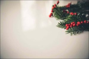 how to grow holly red holly with green branches