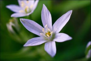 winter wedding flowers star of bethlehem