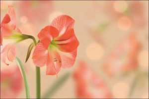 winter wedding flowers amaryllis flowers