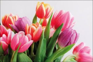 winter wedding flowers bouquet of colorful tulips