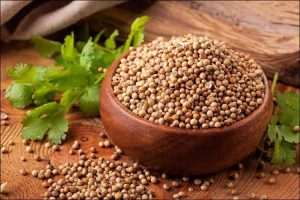 spices to grow indoors coriander seeds