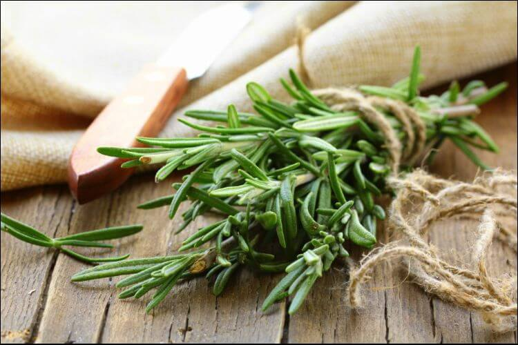 how to care for rosemary indoors fresh rosemary
