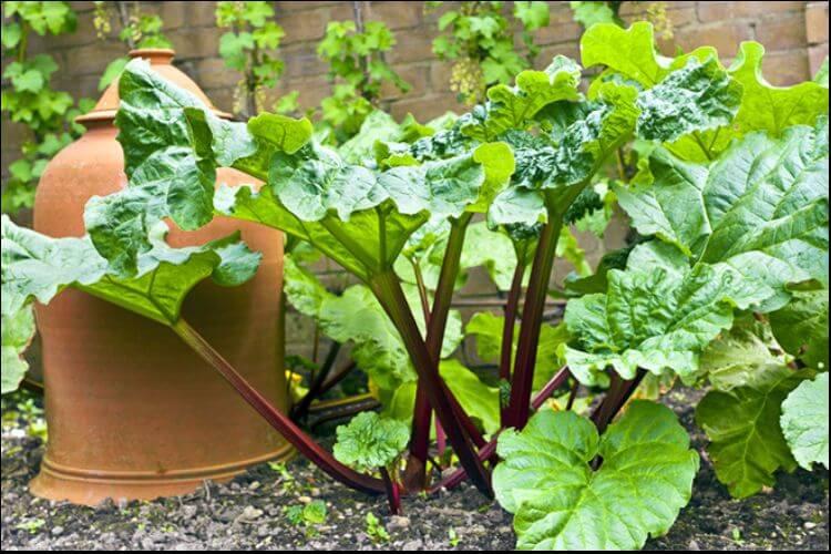 small garden cloche