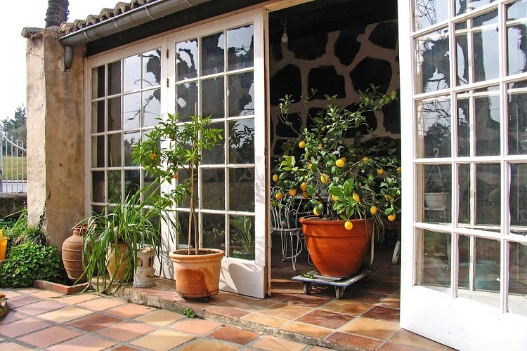lemon tree in pot in an open door to the porch