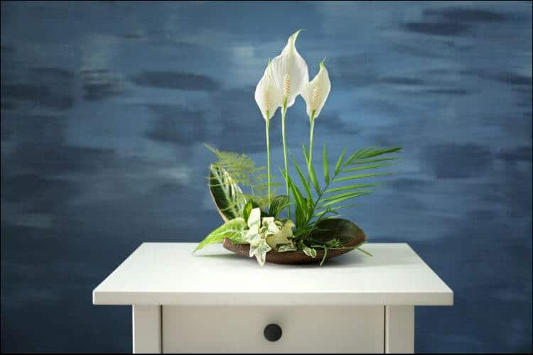 how to care for a peace lily indoors peace lily arrangement
