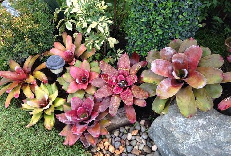Succulents growing in a rock garden