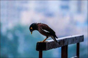 bird on a metal pipe