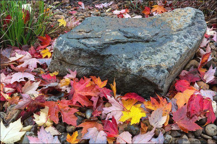landscaping with boulders boulder on autumn leaves