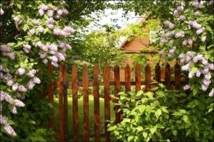 secret garden landscaping bushy garden