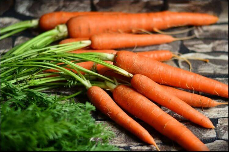 what to plant in January bunch of carrots