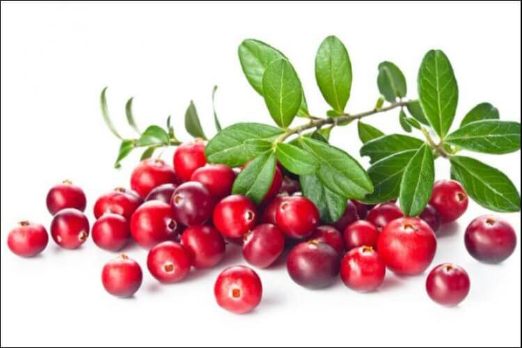 how to grow cranberry branch with leaves and fruits