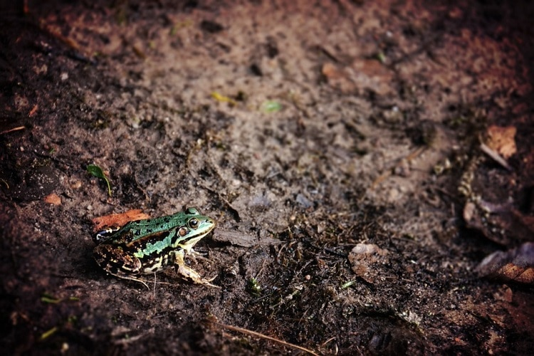 Frog sitting on the ground