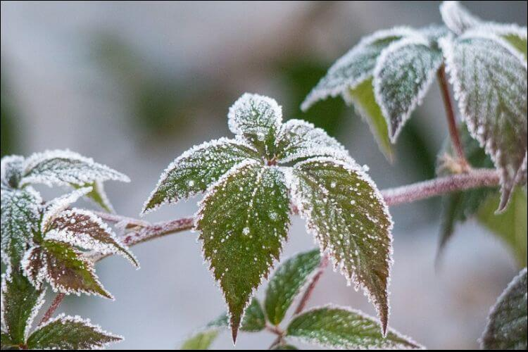 what to plant in January frozen leaf