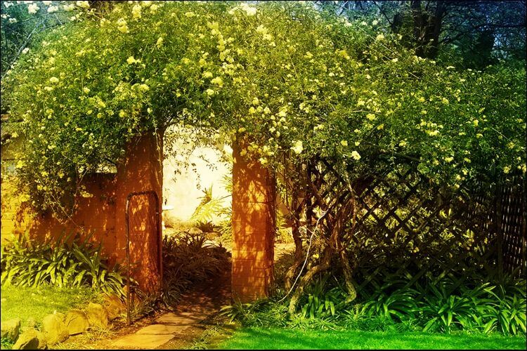 secret garden landscaping green secret garden