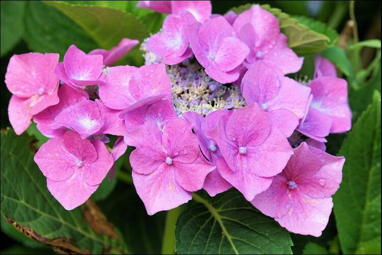January wedding flowers hydrangea flower