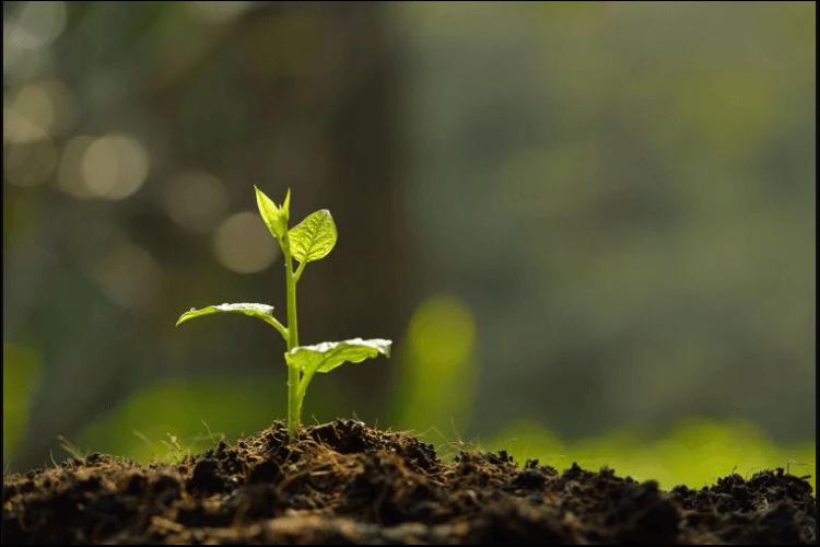 mound gardening plant sprout
