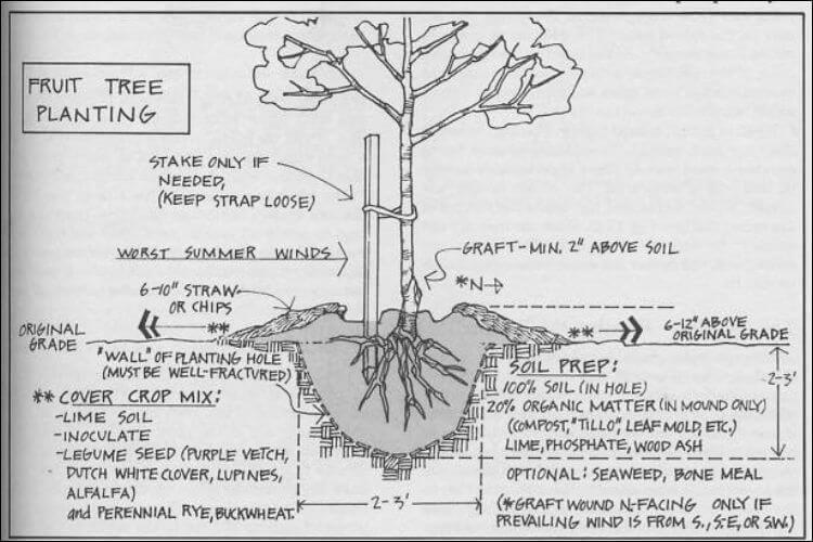 mound gardening planting tree