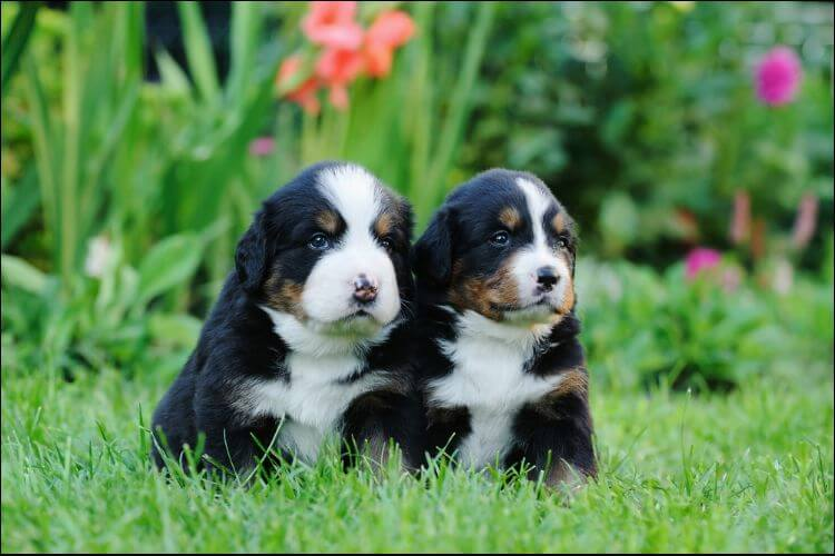 dog friendly landscaping two puppies in the grass