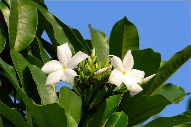 January wedding flowers stephanotis madagascar jasmine