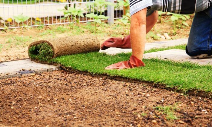 planting lawn