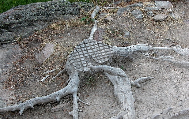 Carved tree stump with big roots