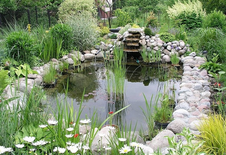 Beautiful garden pond with a lot of vegetation