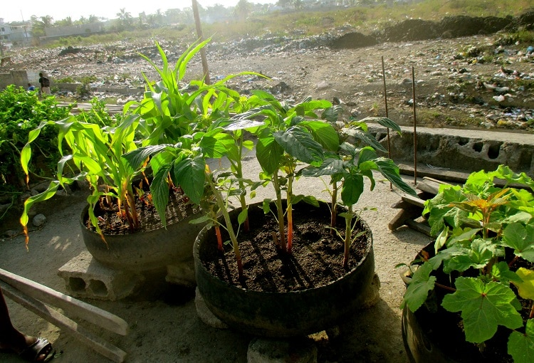 Composting plants in pots