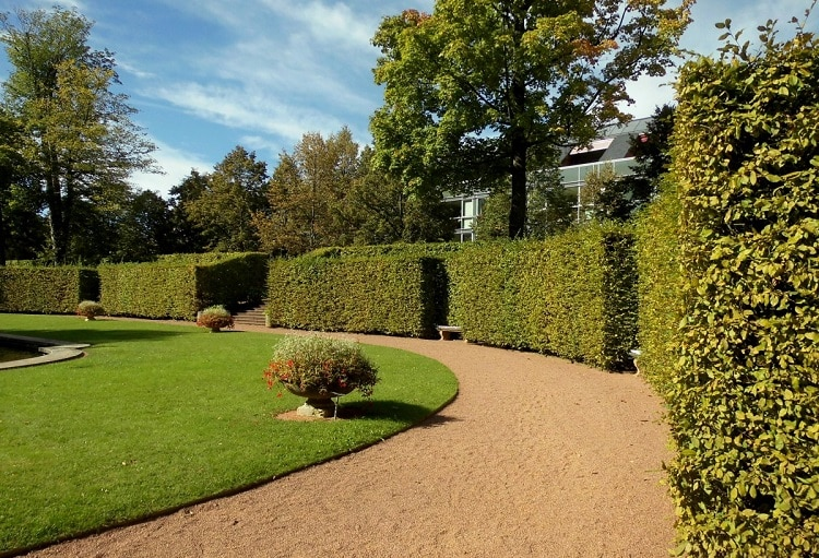 Tall hedges surrounding a garden