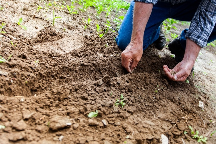Man planting some seeds in the soil