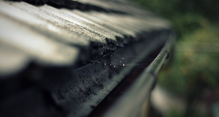 Rain gutter covered in spider webs