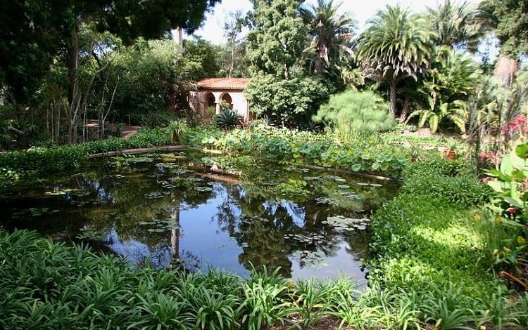 Lotus garden pond surrounded by resplendent vegetation