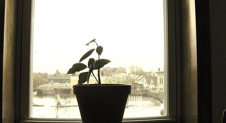 potted plant in front of a window