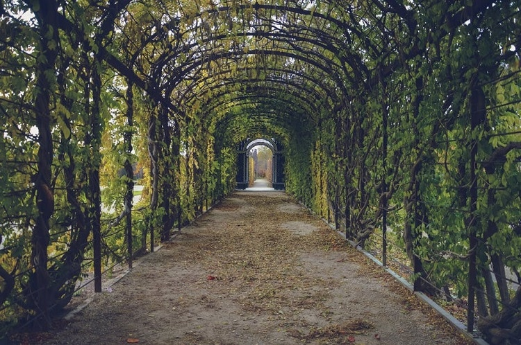 Aisle in a garden shaded by several archways