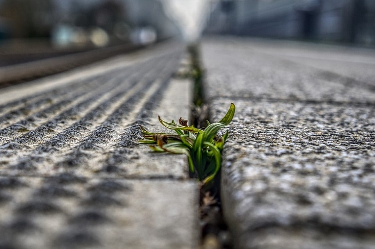 Weeds growing out of concrete
